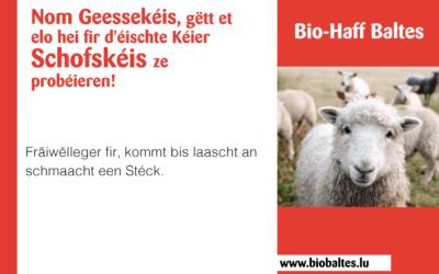 Bio-Joghurt & Käse vom Schaf